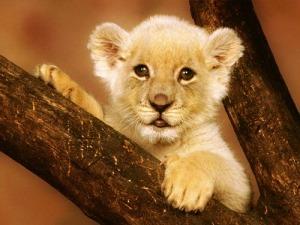 leones-cachorros-553906